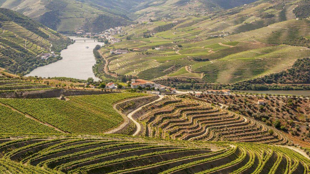 Douro-Portogallo-Vinho-Verde-Bagaceira-Coqtail-Milano