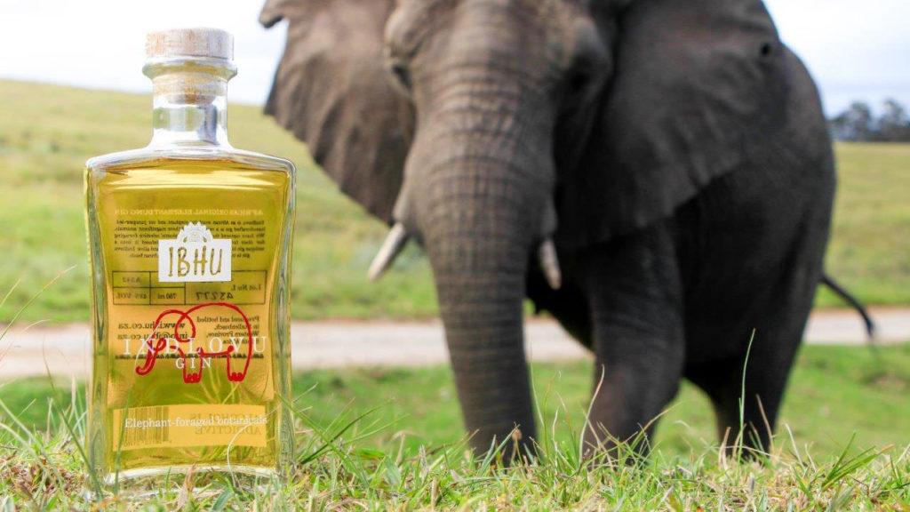 Gin con escrementi di elefante Indovlu Sudafrica Coqtail Milano