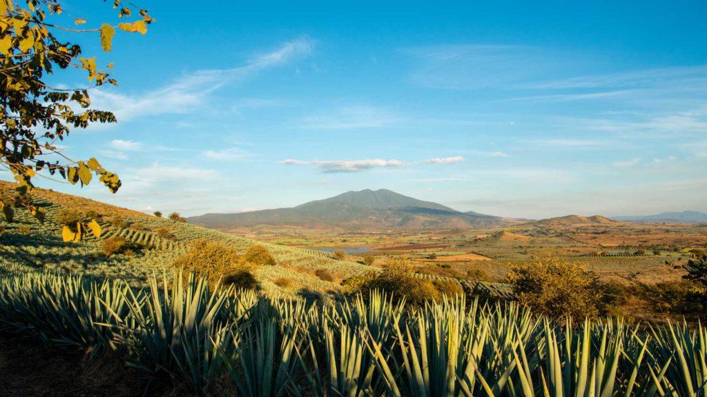 Agave-Blu-paesaggio-Messico-Jalisco-Coqtail-Milano