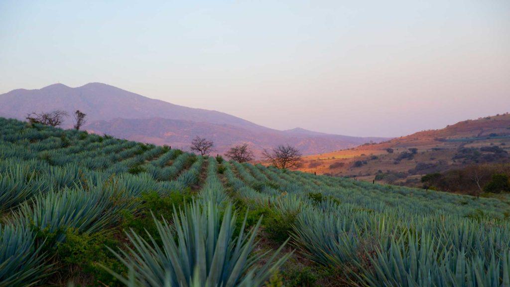 Jalisco-zona-produzione-Tequila-Coqtail-Milano