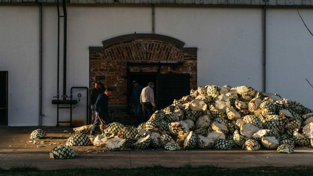 Pigne-produzione-tequila-Coqtail-Milano
